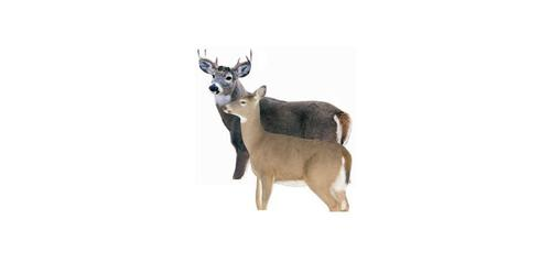 Montana Decoy Silhouette Buck and Doe Whitetail Deer Decoy?>