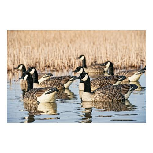 Avian-X Topflight Honker Floaters Goose Decoys?>